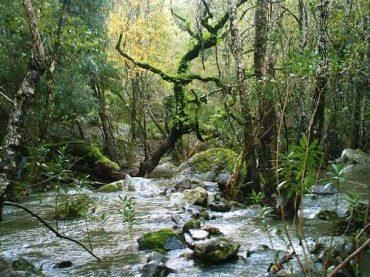 La sección Tierra nos habla de la reforma de la ley de los parques nacionales