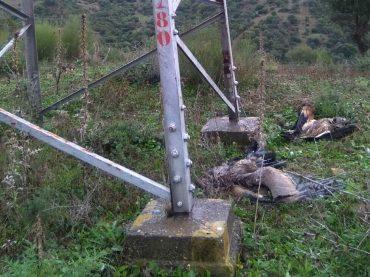Hallan diez buitres muertos en el paraje de Charcones