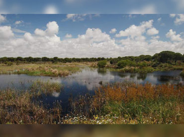 Tierra | Acuífero de Doñana