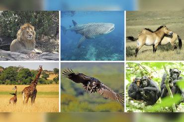 Tierra   Desaparición de especies