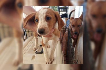 Amigos peludos | Animales en adopción
