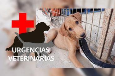 Amigos Peludos | Urgencias veterinarias