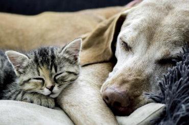 Amigos Peludos | Animales geriátricos