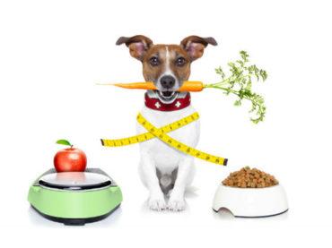 Amigos Peludos | Más adopciones – Alimentación y Obesidad