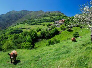 Tierra | La España rural